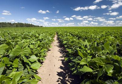 GMO Field Crops
