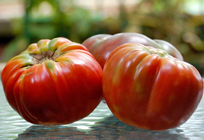The Best Tomato Varieties to Grow at Home | Planet Natural