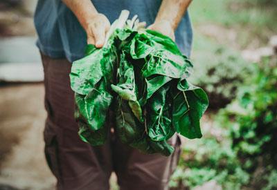 Organic Food Study
