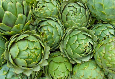 how to grow artichokes organically planet natural