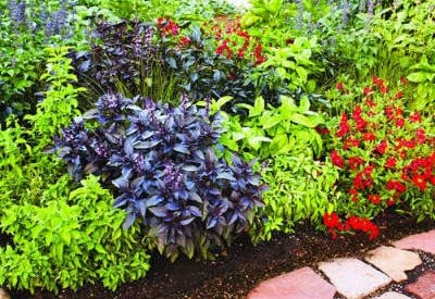 Herb Garden Border \u201c & Gardening 101: Planning and Design Guide | Planet Natural