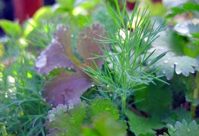How to Grow Herbs | Planet Natural