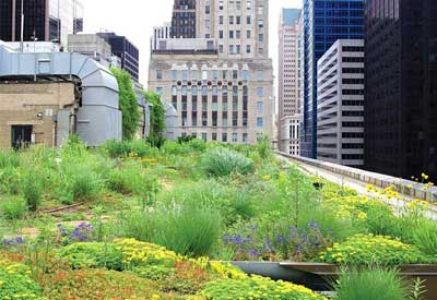 Benefits Of Green Roofs Planet Natural