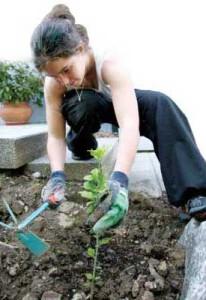 healthy-gardens