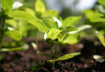 The Benefits Of Organic Fertilizers Planet Natural