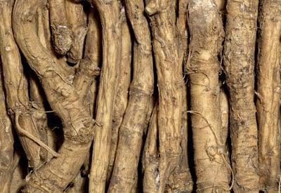 horseradish R