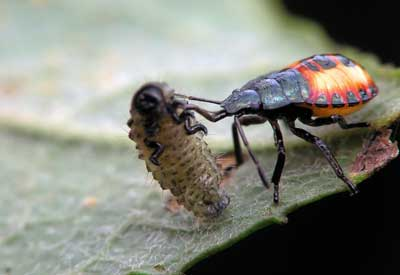systemic houseplant insect control how to use