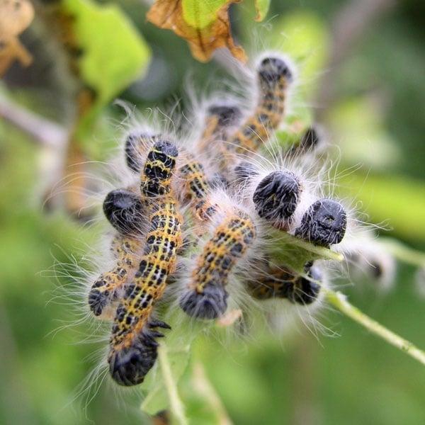 Pest Problem Solver