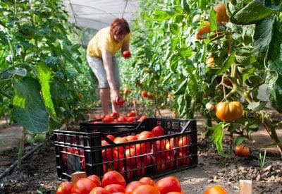 Vegetable Garden Boxes Small Spaces