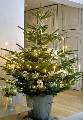 Caring for and Planting a Live Christmas Tree | Planet Natural