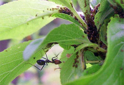 Potted Plant Pests