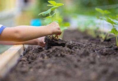 Planting School Garden