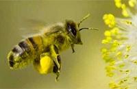 Bee Flight