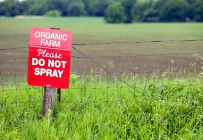 Organic Farm (No Spray)
