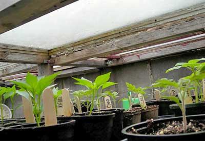 Cold Frame Garden Kits Extend Your Season Planet Natural