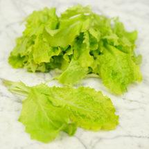 Lettuce, Australian Yellow