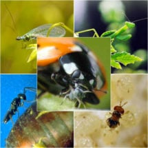 Beneficial Insect Pack
