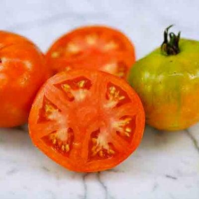 Tomato, Bison