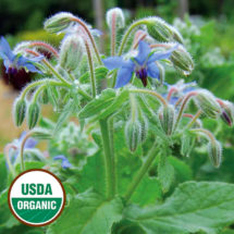 Herb, Borage