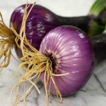 Onion, Brunswick