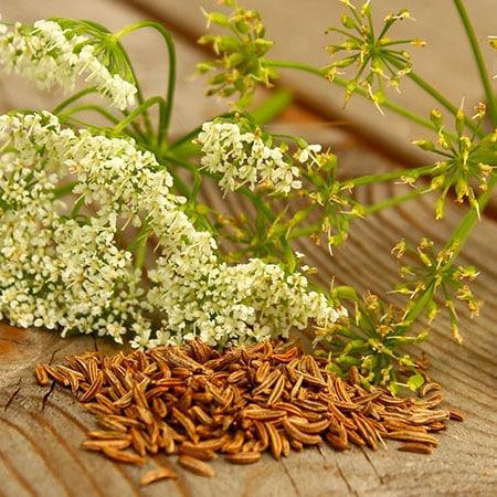 Caraway Herb Seed