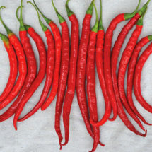 Cayenne Pepper Seeds