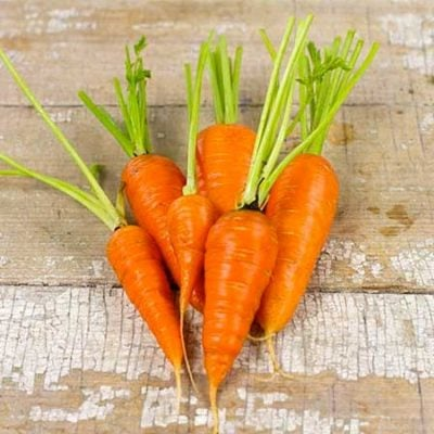 Carrot, Chantenay Red Core