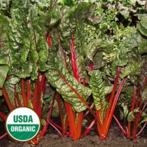 Swiss Chard, Rhubarb Red