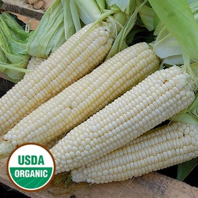 Sweet Corn, Stowell's Evergreen