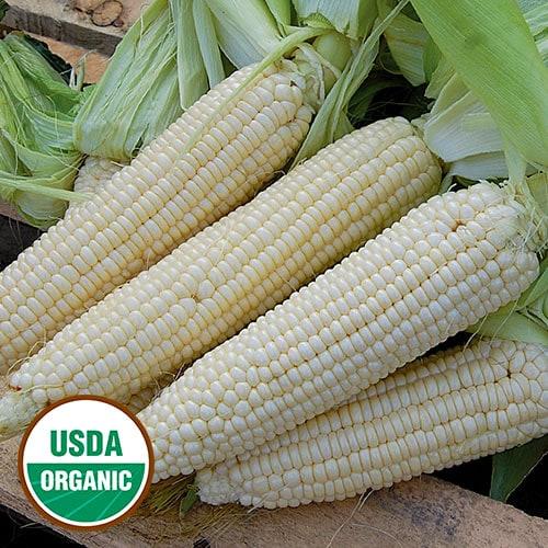 Sweet Corn, Stowell's Evergreen