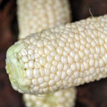 Corn, Country Gentleman Sweet