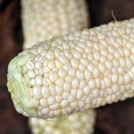 Corn, Country Gentleman Sweet