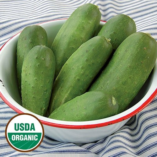 Cucumber, Double Yield