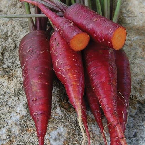 Carrot, Dragon
