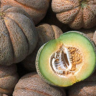 Melon, Early Hanover (Baker Creek)