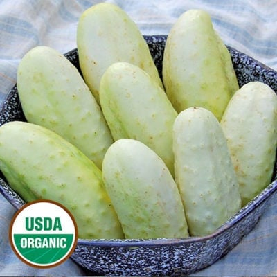 Cucumber, Edmonson