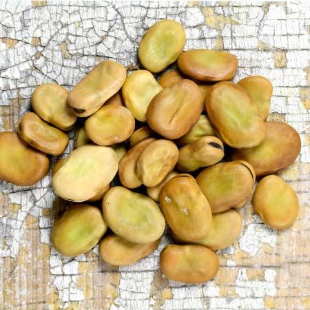 Fava Bean, Broad Windsor