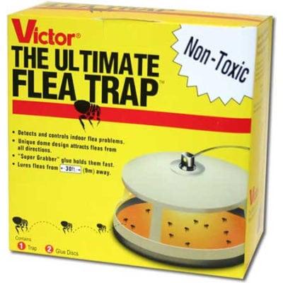 The Ultimate Flea Trap