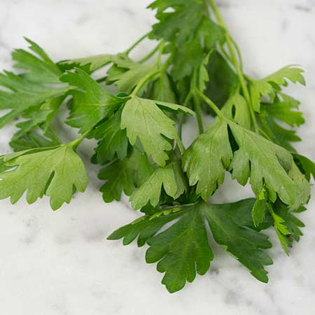 Parsley, Giant of Italy