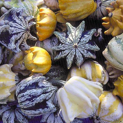 Ten Commandments Gourd Seeds Planet Natural