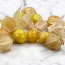Ground Cherry