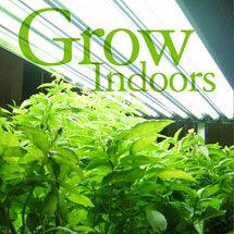 Growing Indoors