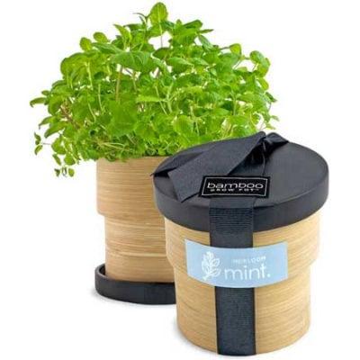 Bamboo Grow Pot