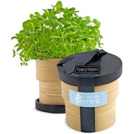 Bamboo Grow Pot Kit Planet Natural