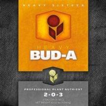HEAVY 16 Bud A