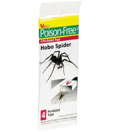 Hobo Spider Trap