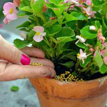 House Plant Food