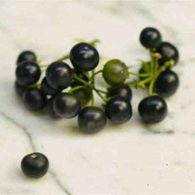 Garden Huckleberry