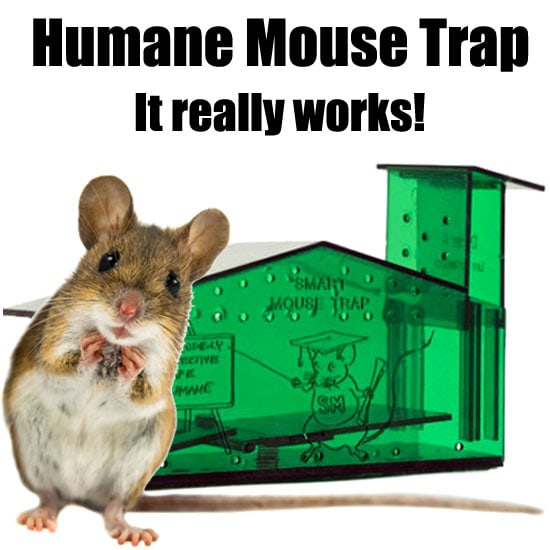 Humane Mouse Trap Catch Amp Release Planet Natural