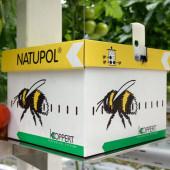 koppert-bumble-bees